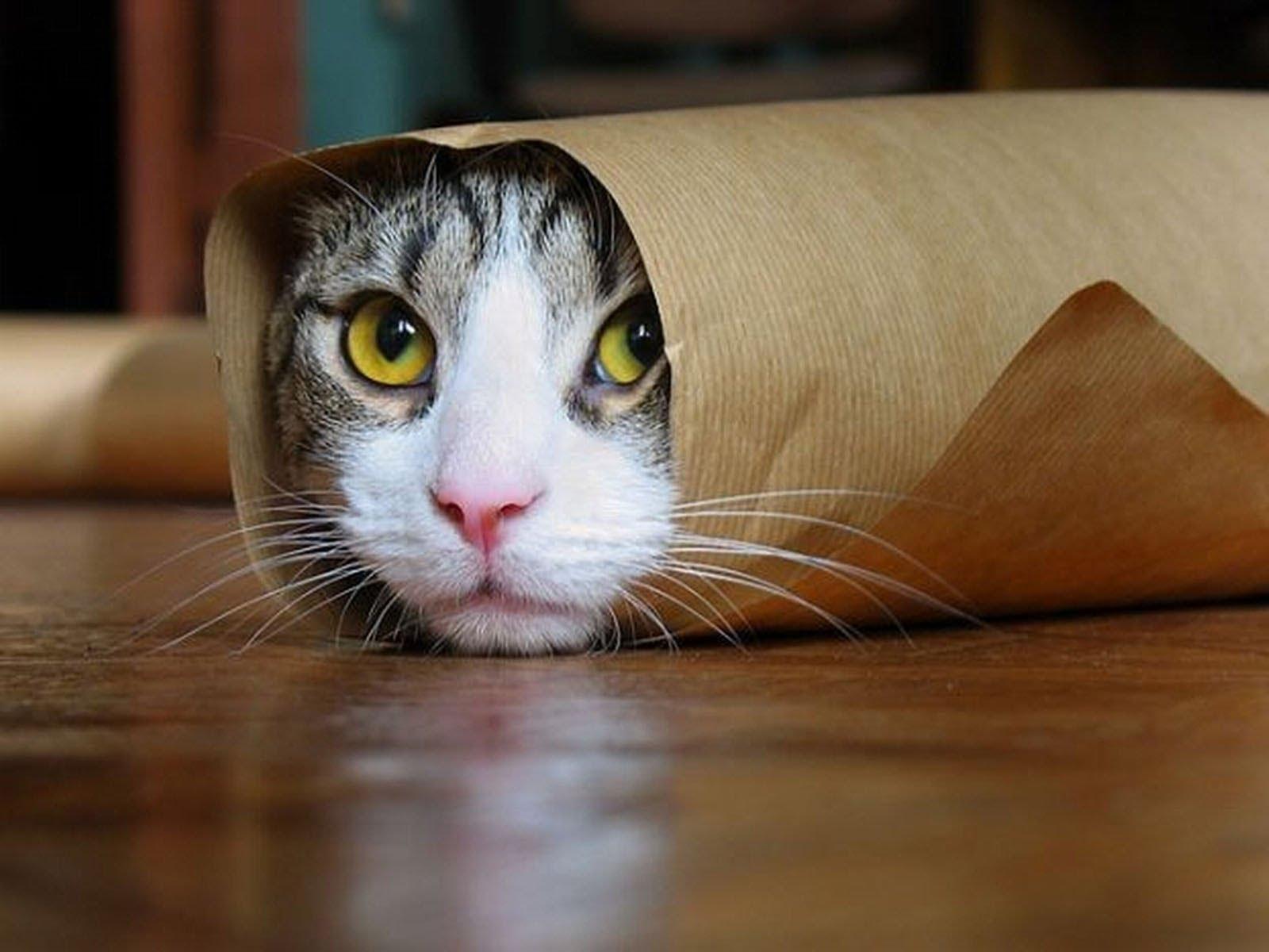 Beautiful cat photo