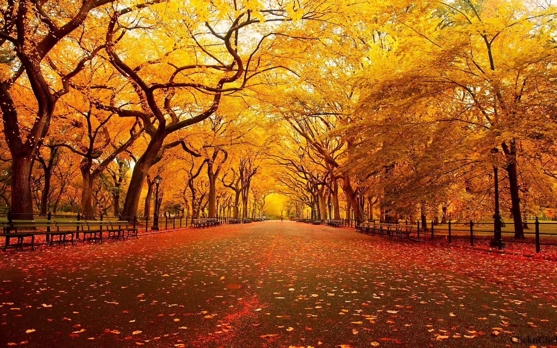Cool Autumn Wallpaper