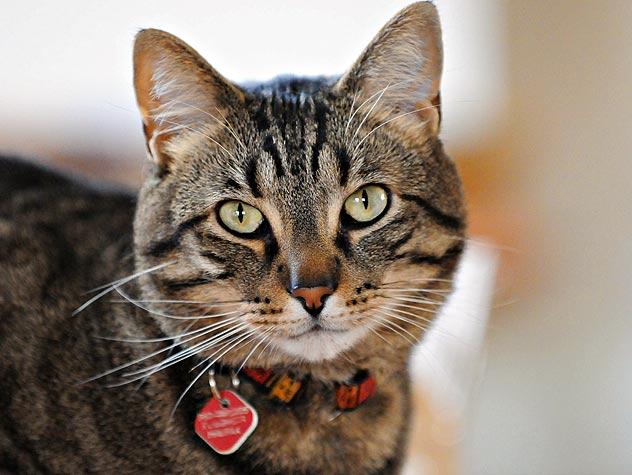 Cool Cat Photo