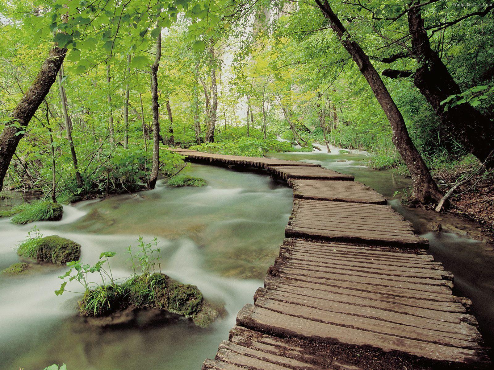 Green Natural Scene
