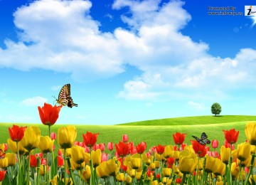 Landscape Natural Scene