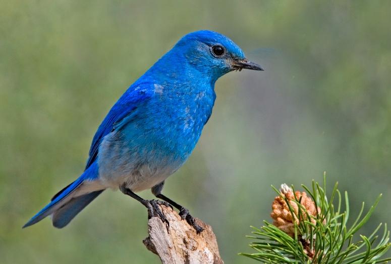 Nice Blue Bird Picture