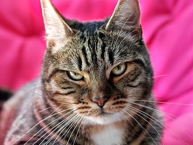Nice Cat Photo