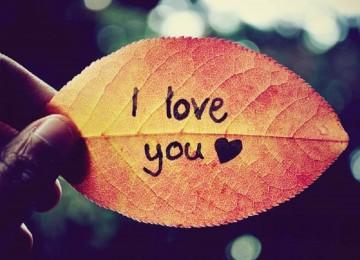 Nice I Love You