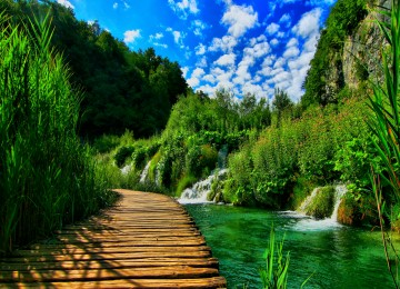 Nice Nature