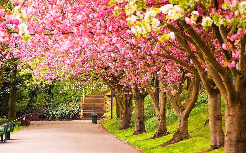 Nice Spring Wallpaper
