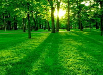 Widescreen Nature