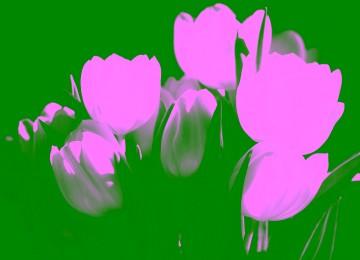 Amazing White Flower