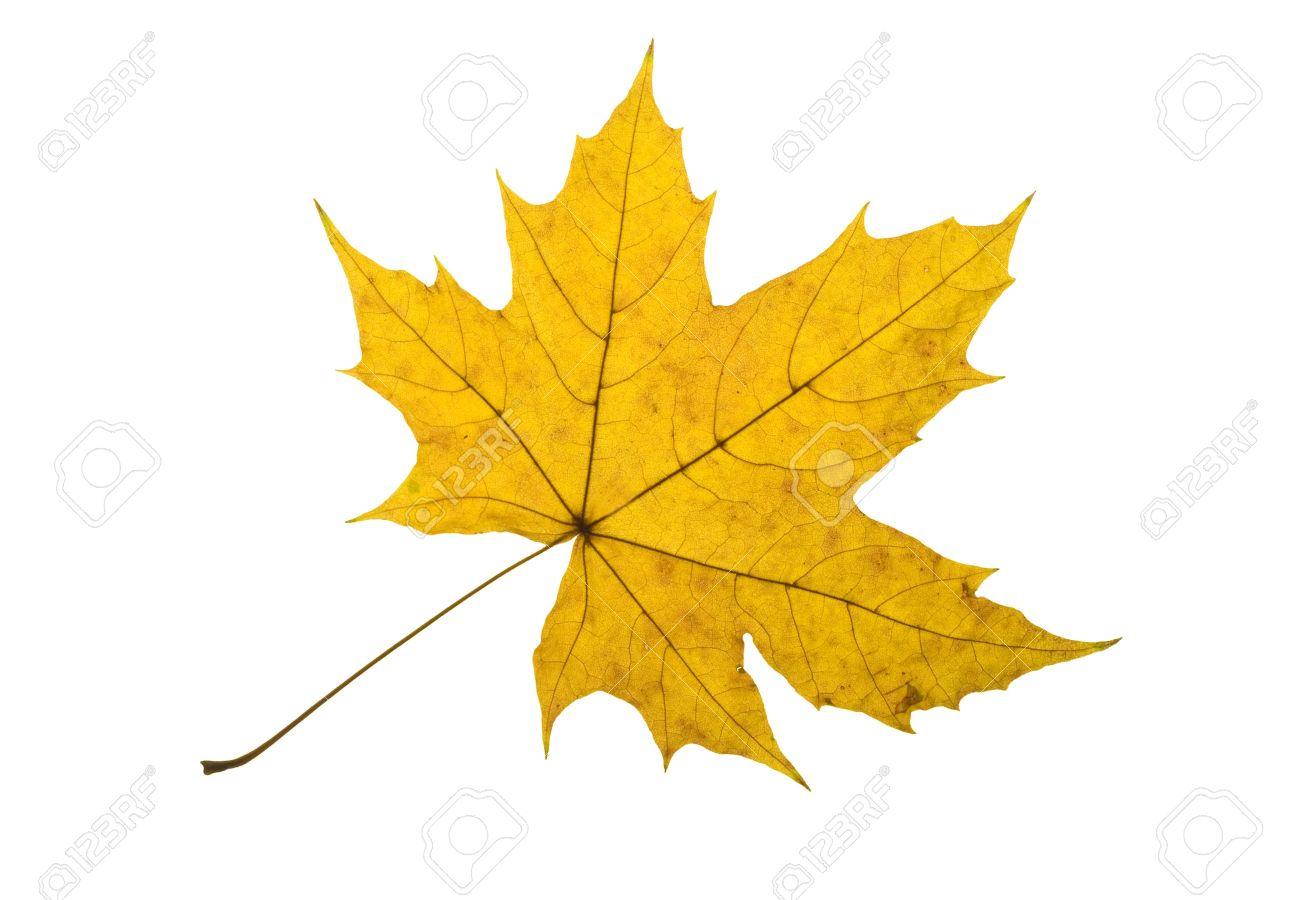 autumn leaves wallpaper hd