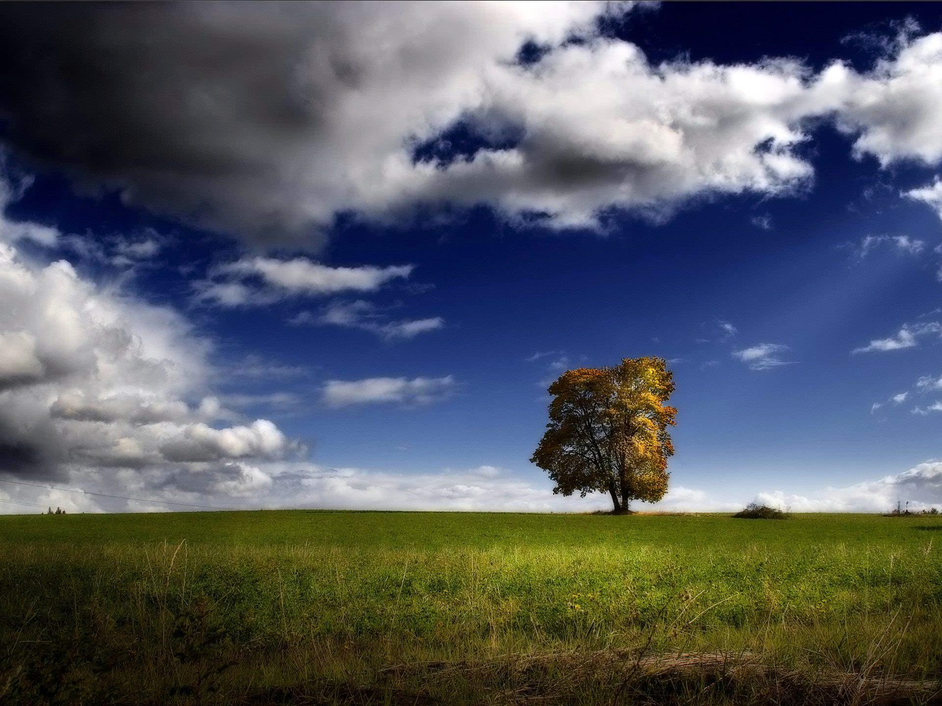 Best Landscape Scene