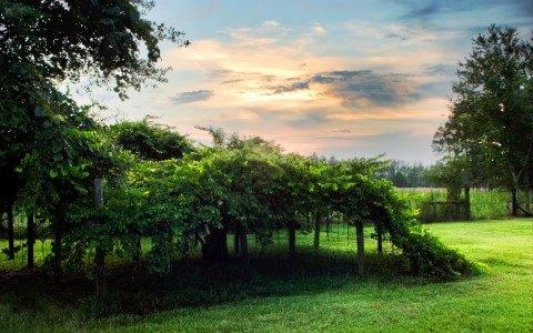 Cool Nature Scene
