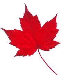 Free Red Leaf