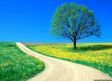 Green Tree Nature Scene