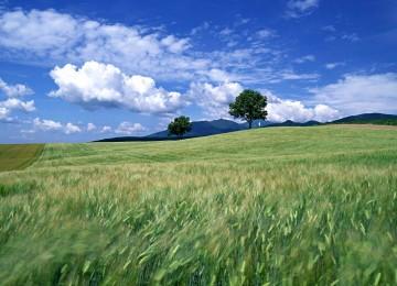 Hd Landscape Scene