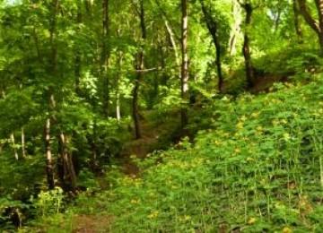 Nature Image HD