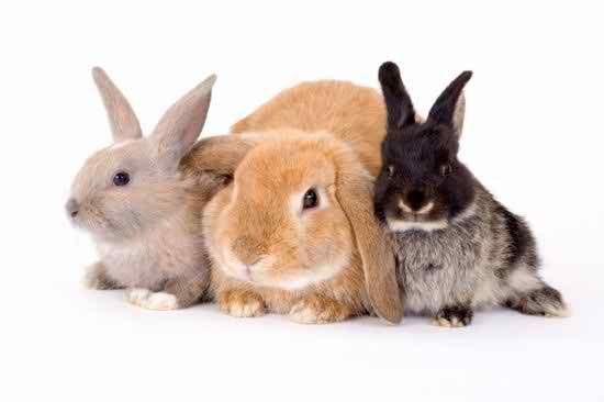 Nice Rabbit Picture