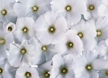 Stunning White Flower