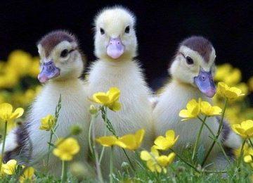 Animal Spring Time