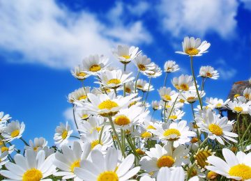 White Flower Sunny Day