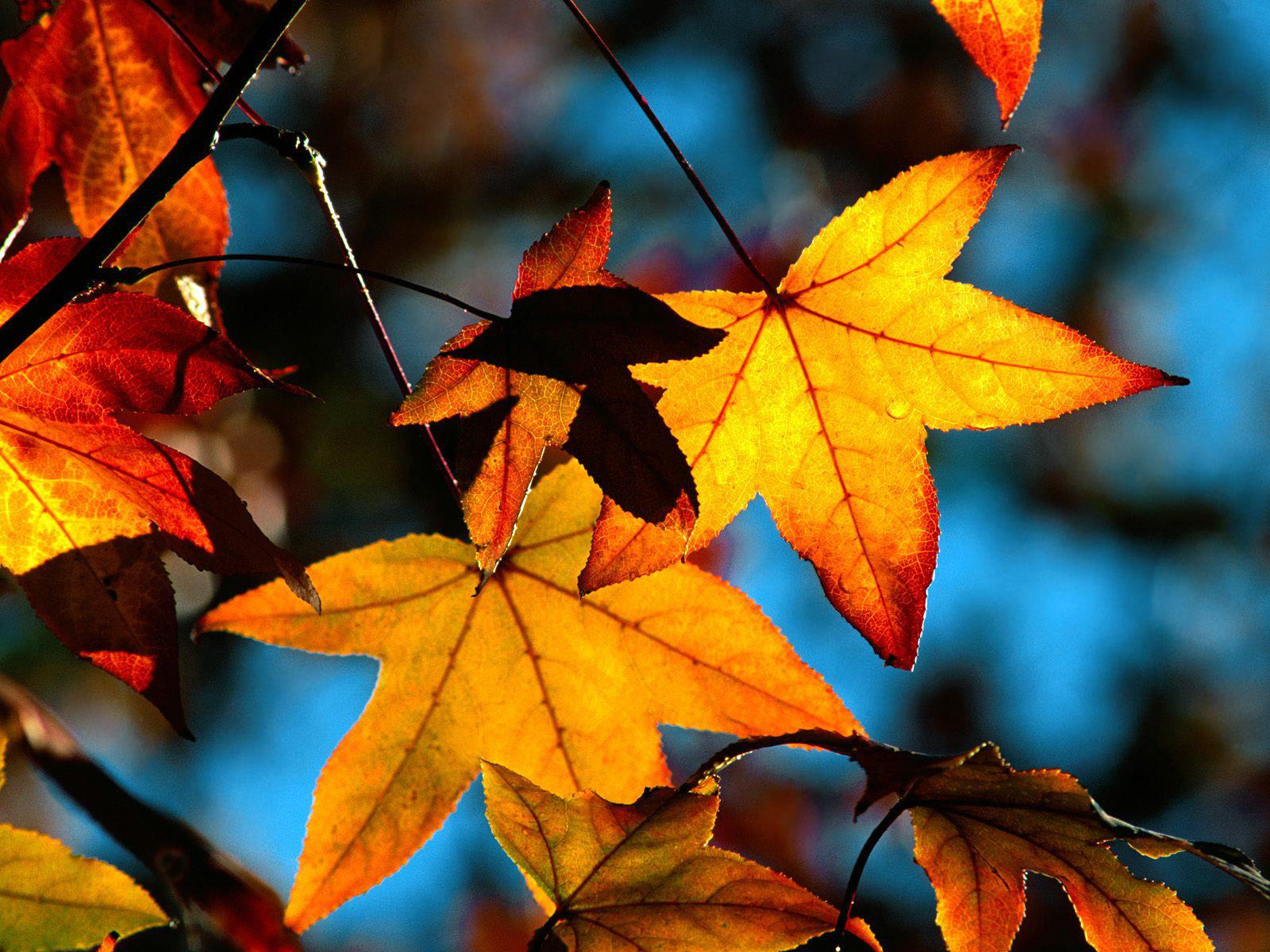 Autumn Leaves Light