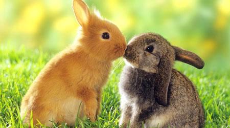 Free Bunny