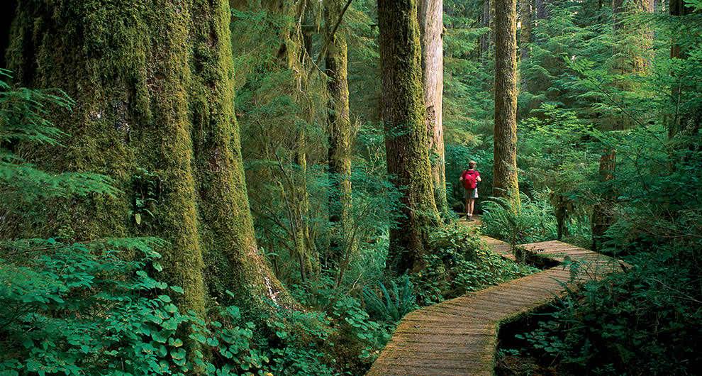 Landscape Vancouver Island