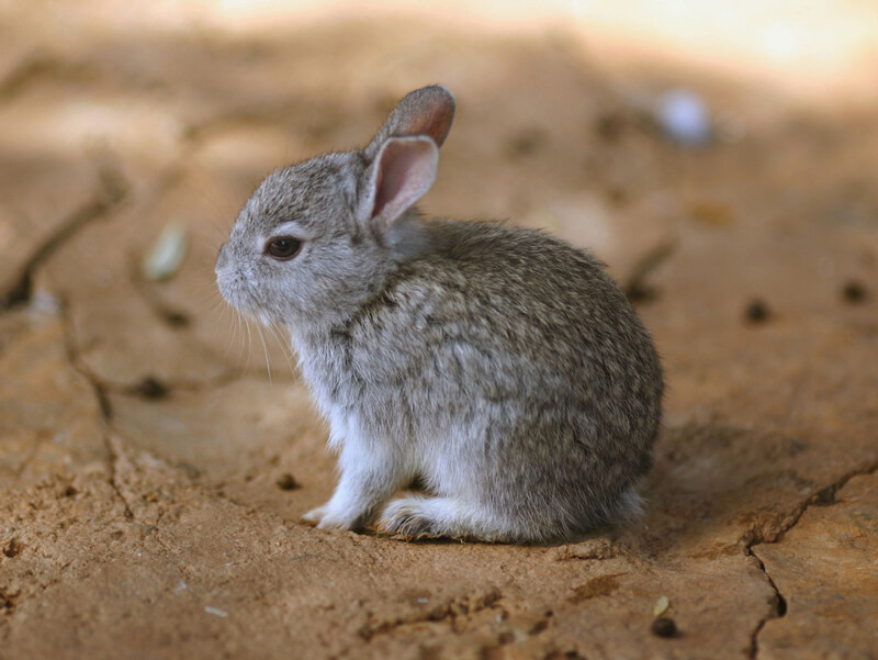 Nice Bunny
