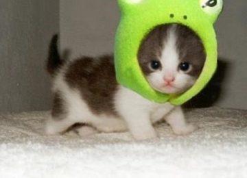 Very Cute Baby Cat Image