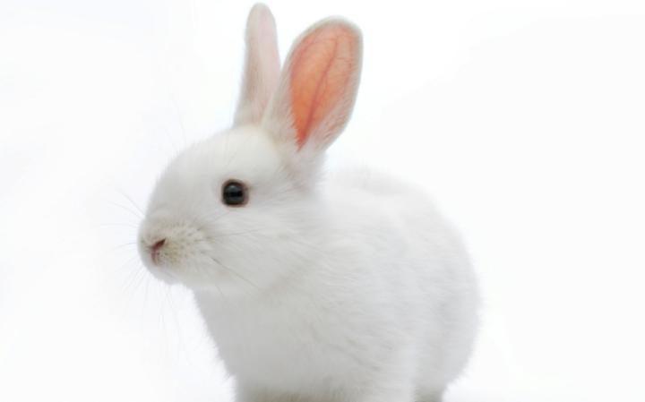 Bunny Pics 38