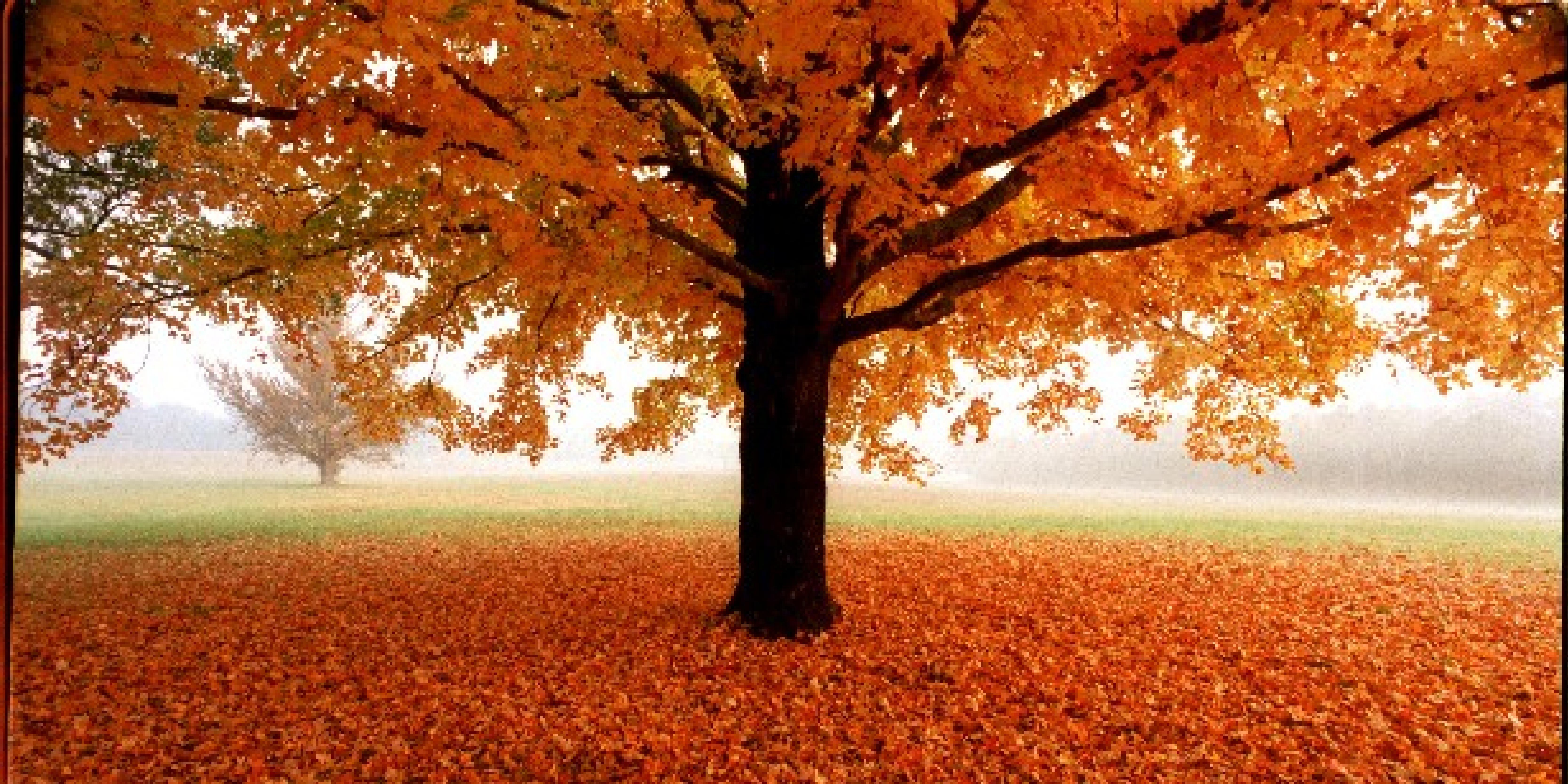 Best Fall