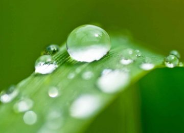 Cool Dewdrop