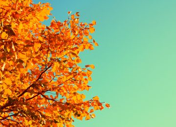 Free Autumn
