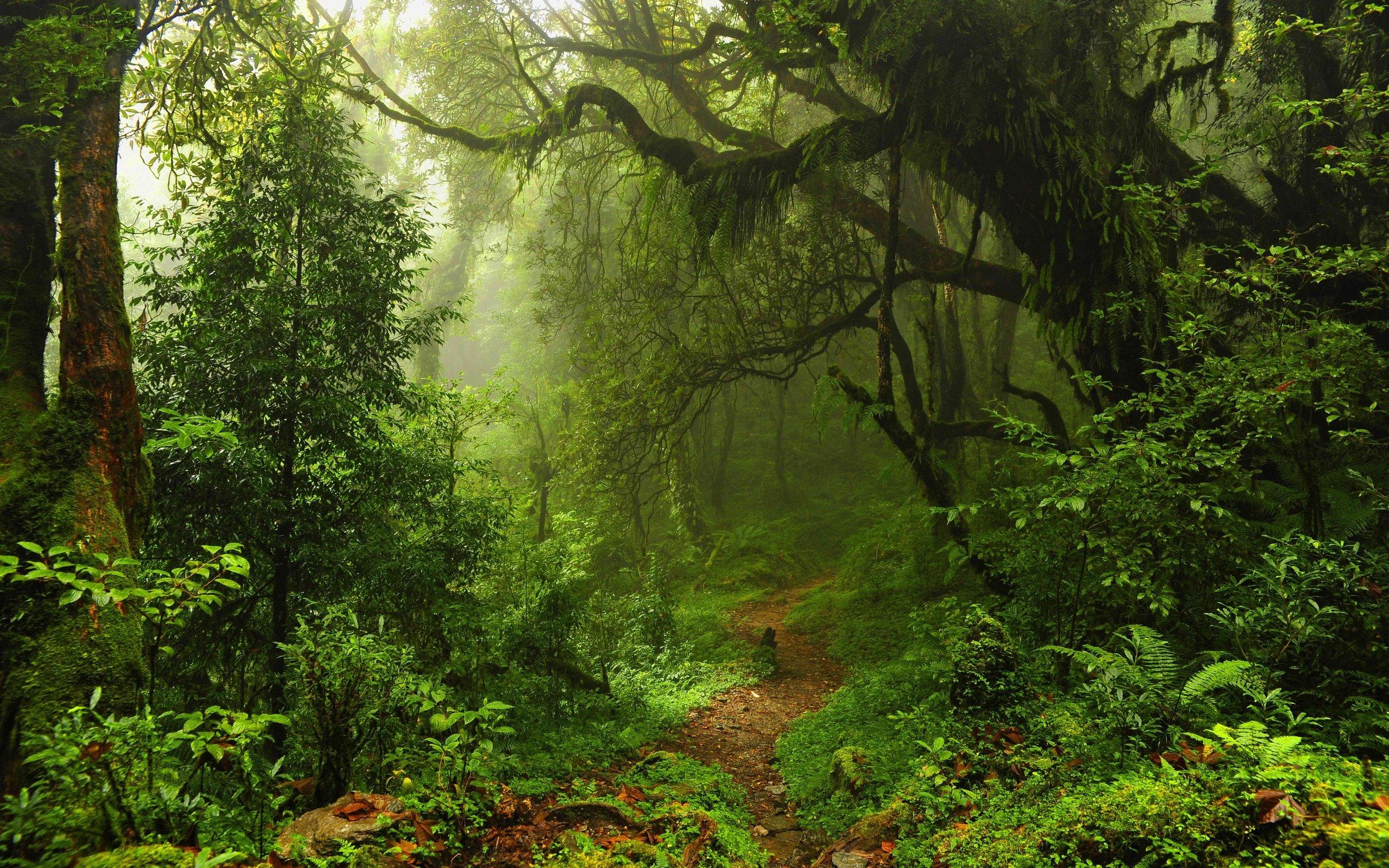 Free Jungle