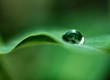 Green Dewdrop