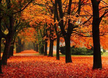 Landscape Fall