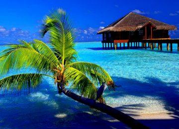 Nice Tropical