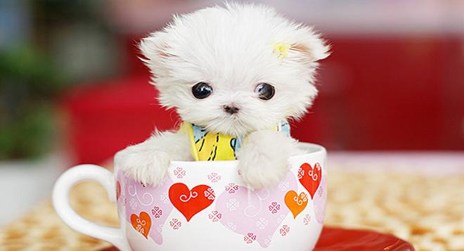 Stunning Cute
