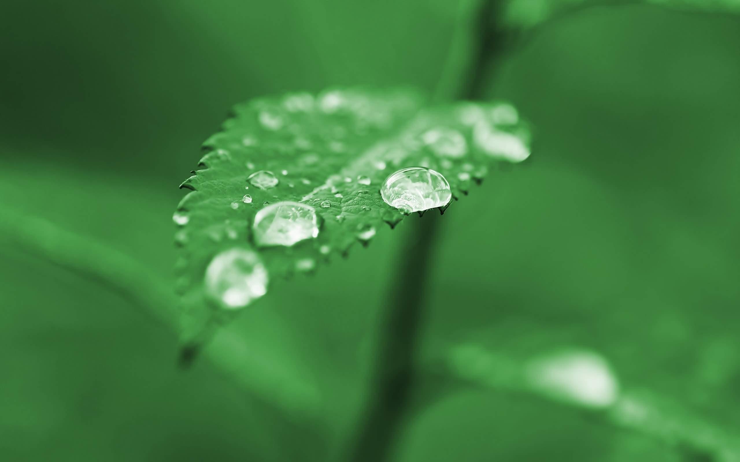 Stunning Dewdrop