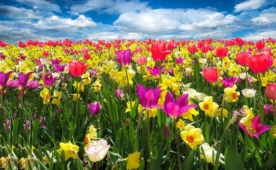 Awakening Spring