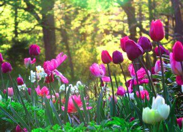 Best Flower Garden