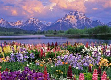 Mountain Flower Garden