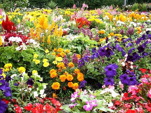 Natural Flower Garden
