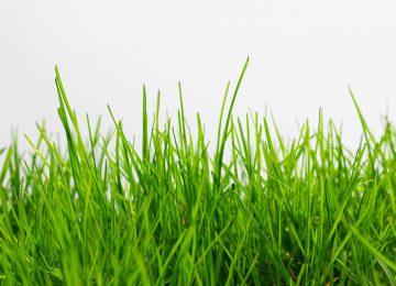 Broadway Grass