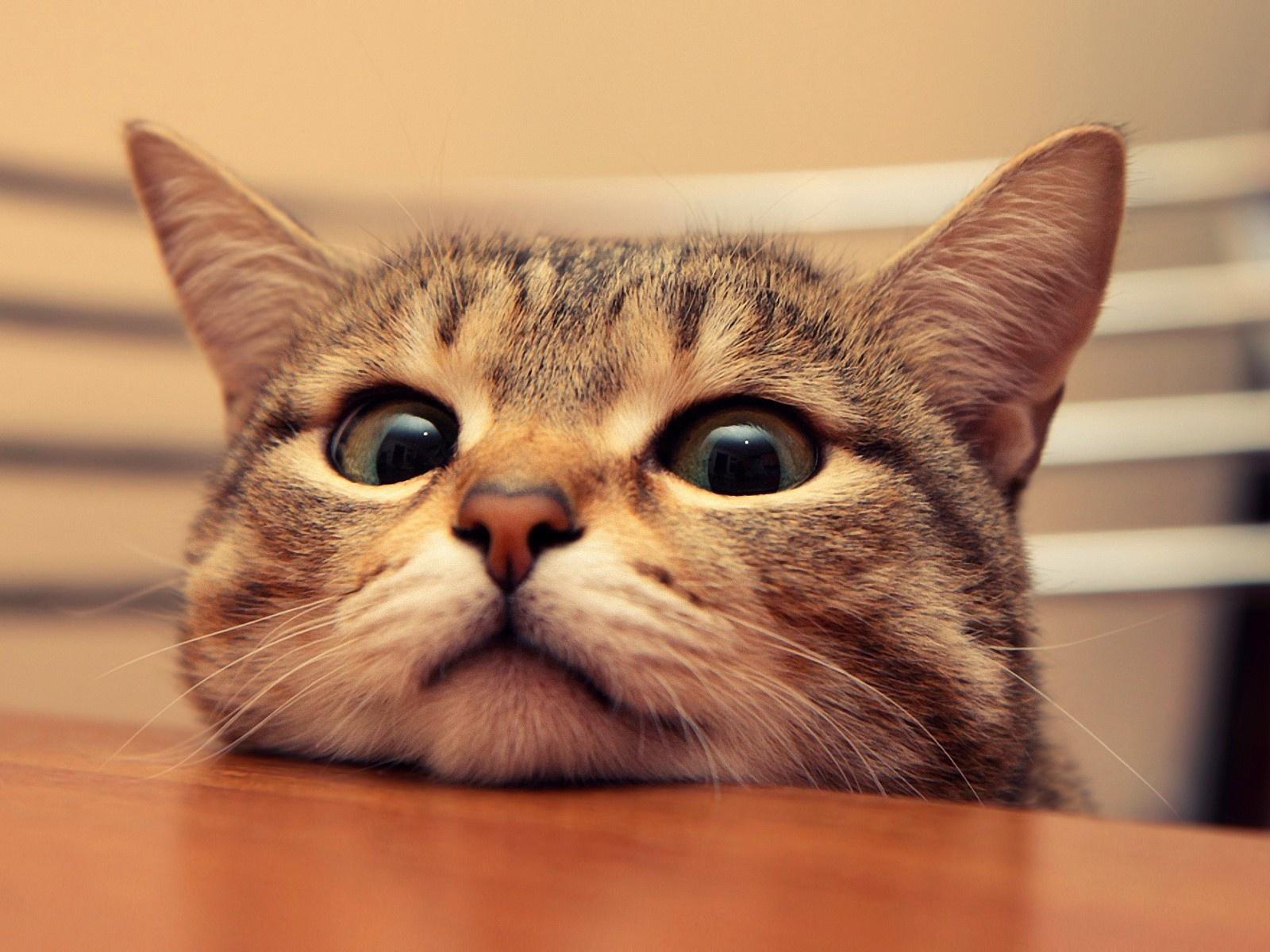 Nice Cute Cat