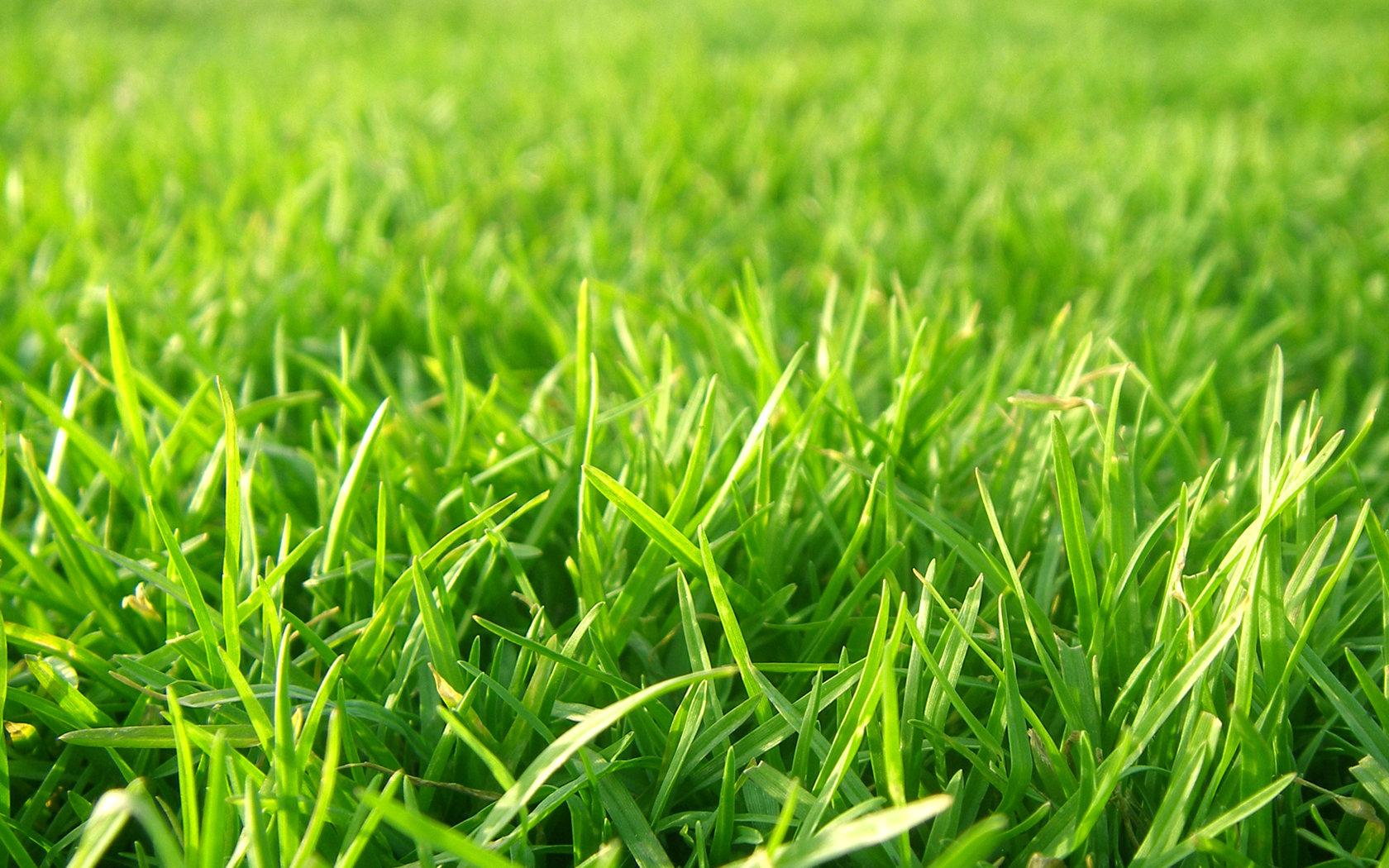 Top Grass