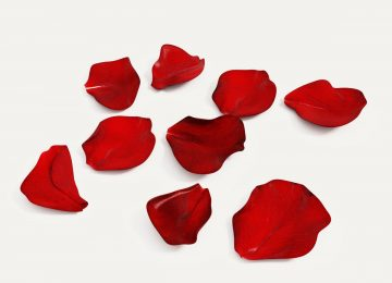 Best Rose Petals