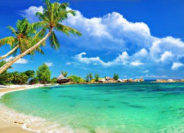 Ocean Tropical