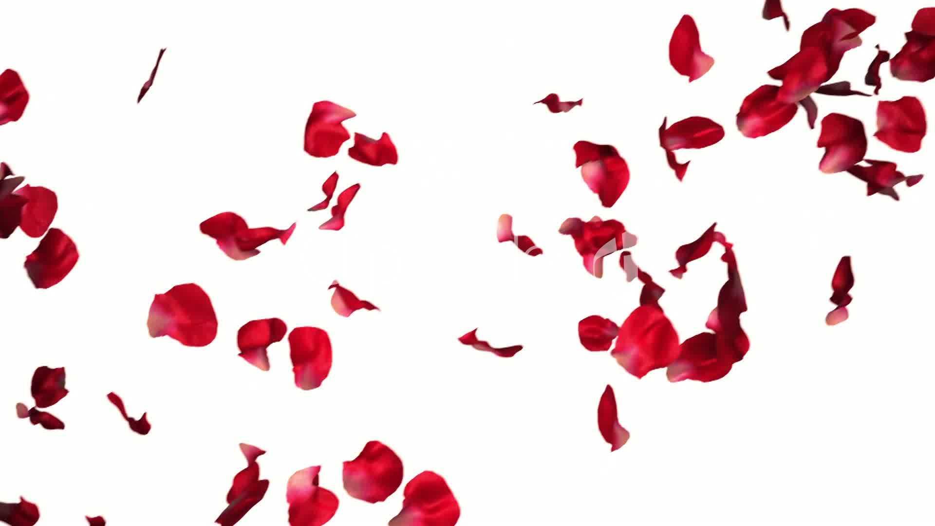 Red Falling Petals