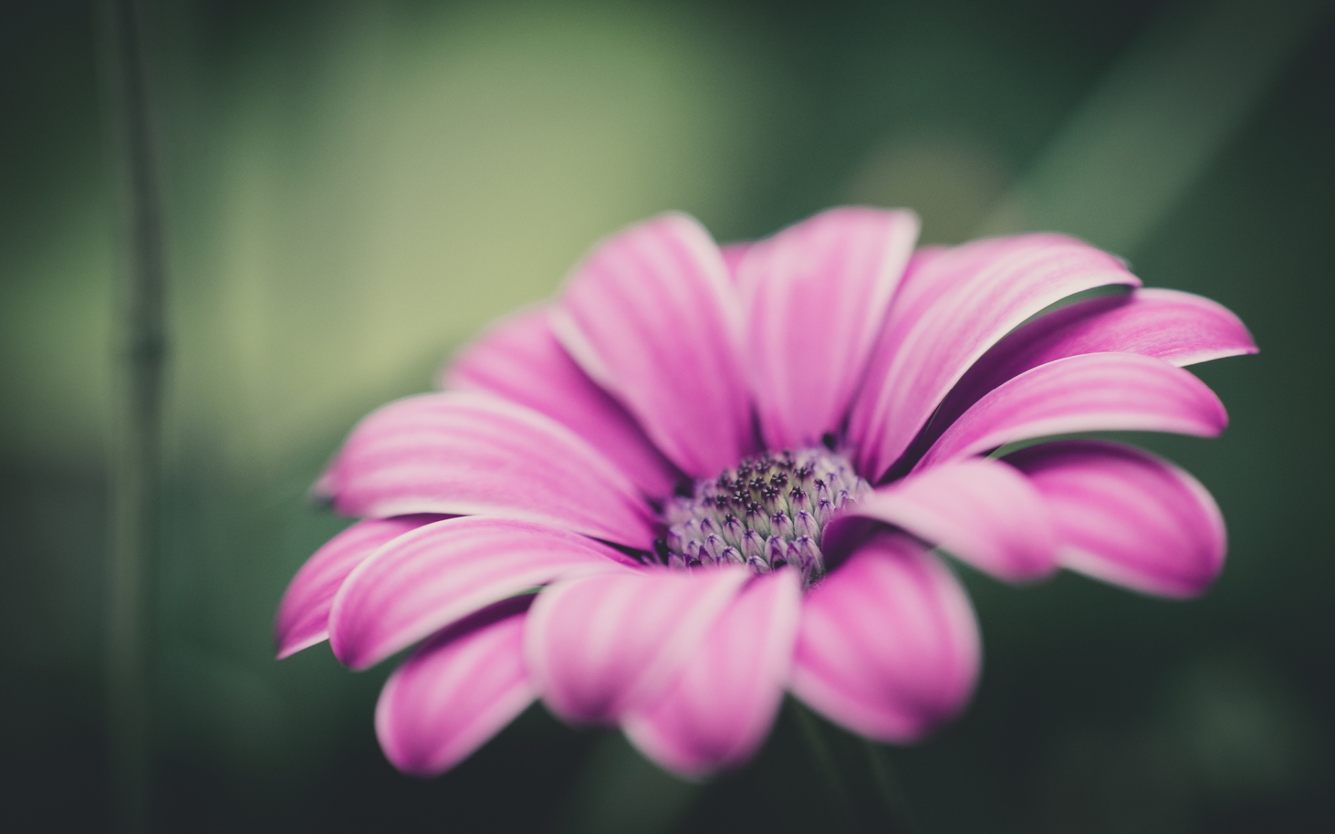 Best Pink Flower