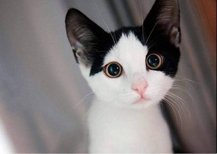 Cutest Cat Image